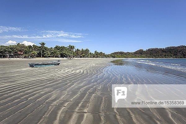 Palmen und Sandstrand bei Ebbe in Samara  Playa Samara  Halbinsel Nicoya  Provinz Guanacaste  Costa Rica  Mittelamerika