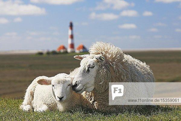 Hausschaf (Ovis gmelini aries) mit Lamm liegt auf Deich vor Leuchtturm Westerheversand  Nordseedeich  Westerhever  Halbinsel Eiderstedt  Schleswig-Holstein  Deutschland  Europa