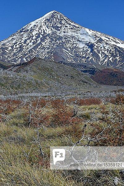 Schneebedeckter Vulkan Lanin  zwischen San Martin de los Andes und Pucon  Nationalpark Lanin  Patagonien  Argentinien  Südamerika