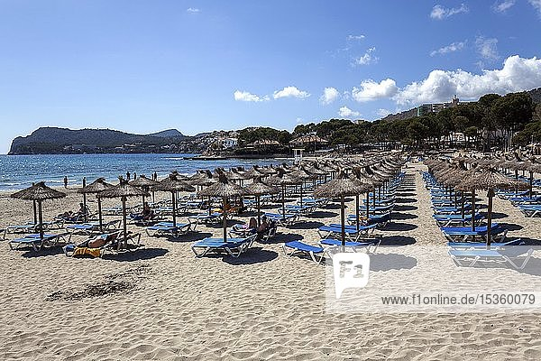 Sandstrand Playa Tora mit Sonnenschirmen und Sonnenliegen  Paguera oder Peguera  Mallorca  Balearen  Spanien  Europa