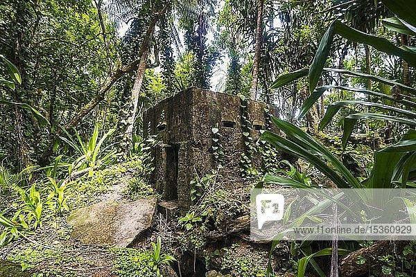 Japanischer Bunker vom Dschungel überwuchert  Kavieng  Neuirland  Papua-Neuguinea  Ozeanien