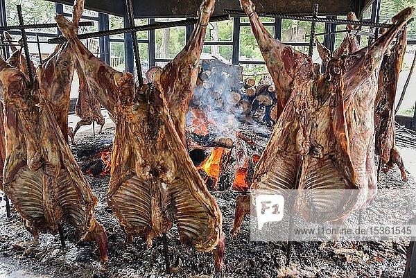 Hammel am Spieß garen an offenen Feuer  typische und traditionelle Spezialität in Feuerland und Patagonien  Ushuaia  Argentinien  Südamerika