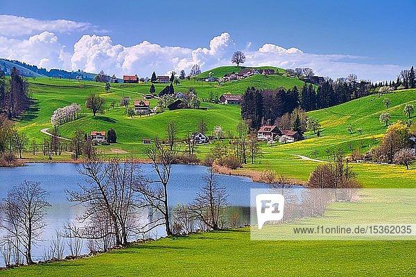 Kleiner See  Hüttnersee mit Hügellandschaft im Frühling  Hütten  Zürcher Oberland  Kanton Zürich  Schweiz  Europa