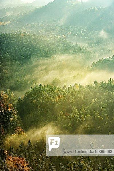 Morgenstimmung  Blick über Wälder mit aufsteigendem Nebel im Herbst  Nationalpark Sächsische Schweiz  Sachsen  Deutschland  Europa