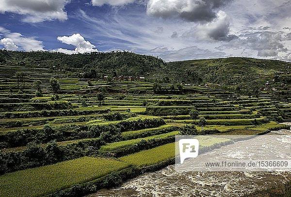 Reisfelder nahe Ambositra  Hochland  Zentral-Madagaskar  Madagaskar  Afrika