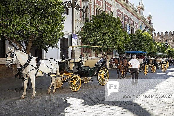 Pferdekutschen am Plaza del Triunfo  Sevilla  Andalusien  Spanien  Europa