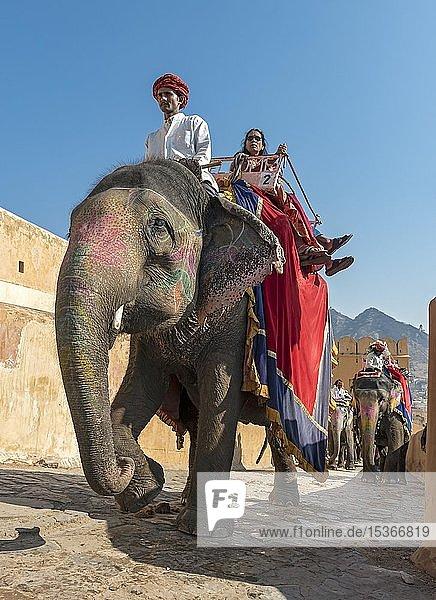 Elefantenritt  indische Elefanten bei Amber Fort  Jaipur  Rajasthan  Indien  Asien
