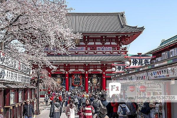 H?z?mon Tor  japanische Kirschblüte  Buddhistische Tempelanlage  Sens?-ji Tempel  Asakusa  Tokio  Japan  Asien