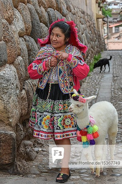 Local woman in traditional costume with a decorated Alpaca (Vicugna pacos)  Old Town  Cusco  Peru  South America