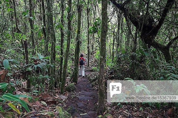 Wanderin auf einem Wanderweg durch tropische Vegetation im Regenwald  Nationalpark Vulkan Arenal  Parque Nacional Volcan Arenal  Provinz Alajuela  Costa Rica  Mittelamerika