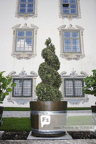Buchsbaum im Schlossgarten von Schloss Zeil  Landkreis Ravensburg  Allgäu  Oberschwaben  Baden-Württemberg  Deutschland  Europa