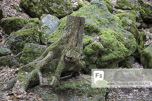 Geschnitztes Baumgesicht in einem Baumstumpf  Steckeschlääfer-Klamm im Morgenbachtal  Binger Stadtwald  Bingen am Rhein  Rheinland-Pfalz  Deutschland  Europa