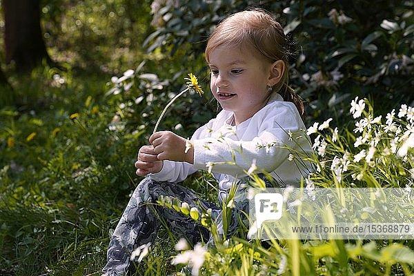 Kleines Mädchen sitzt zufrieden zwischen Blumen auf der Wiese  Tschechien  Europa
