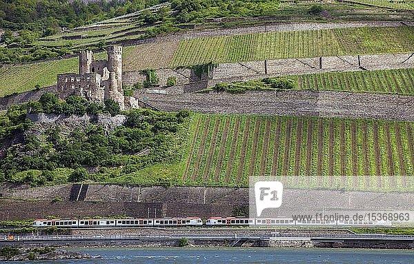 Zug  Mittelrheinbahn bei der Ruine Burg Ehrenfels am Rhein  Oberes Mittelrheintal  Bingen am Rhein  Rheinland-Pfalz  Deutschland  Europa