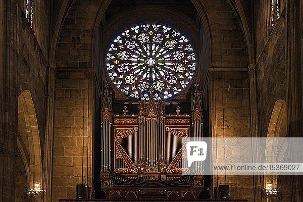 Orgel und Glasrosette  Katholische Kirche Santa Eulàlia  Innenansicht  Altstadt  Palma de Mallorca  Mallorca  Balearen  Spanien  Europa