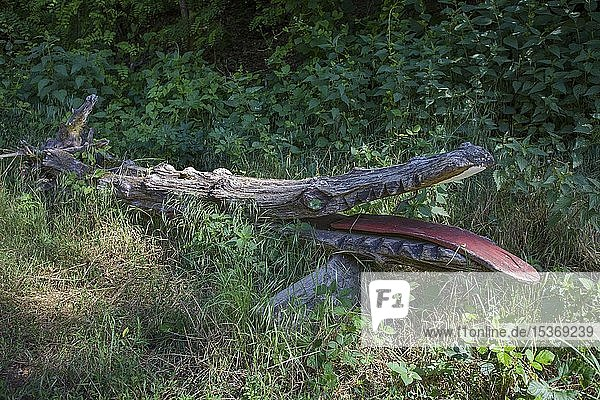 Geschnitzte Krokodilfigur aus einem Baumstamm  Waldgeisterweg  Oberotterbach  Südliche Weinstrasse  Rheinland-Pfalz  Deutschland  Europa