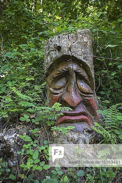 Geschnitztes Baumgesicht in einem Baumstumpf  Waldgeisterweg  Oberotterbach  Südliche Weinstrasse  Rheinland-Pfalz  Deutschland  Europa