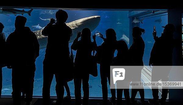Silhouetten von Besuchern vor einem großen Aquarium mit Fischen  großer Walhai (Rhincodon typus) schwimmt vorbei  Osaka Aquarium Kaiyukan  Osaka  Japan  Asien