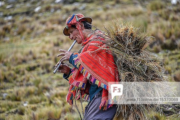 Indio man with hat and colorful poncho wearing bundles of grass and playing flute  Andes  at Cusco  Peru  South America