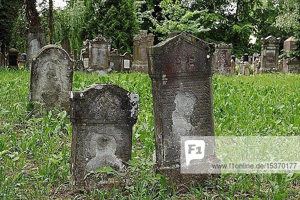 Jüdischer Friedhof  verwitterte  alte Grabsteine  Bad Buchau  Oberschwaben  Baden-Württemberg  Deutschland  Europa