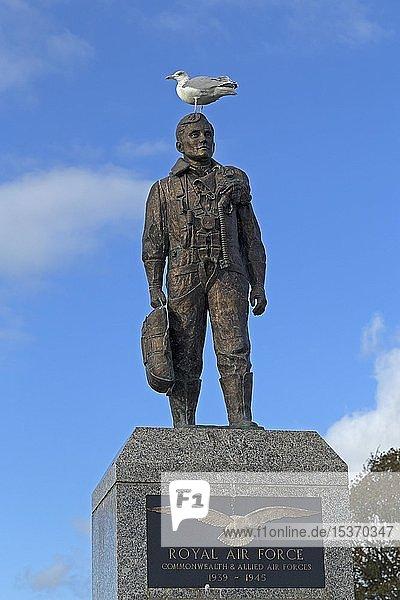 Silbermöwe (Larus argentatus) auf Royal Air Force Denkmal  Plymouth Hoe  Plymouth  Devon  England  Großbritannien  Europa