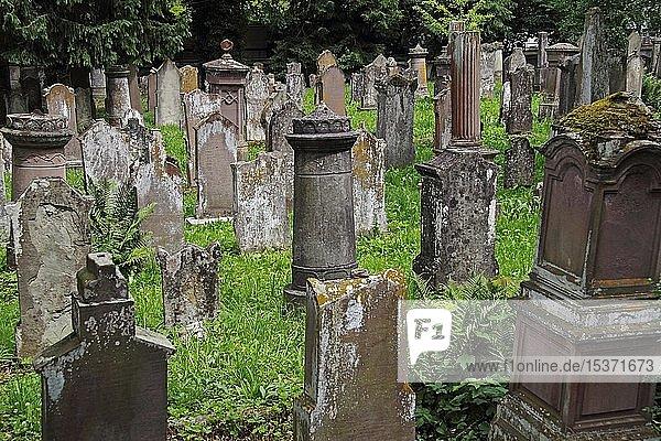 Grabsteine  Jüdischer Friedhof  Bad Buchau  Oberschwaben  Baden-Württemberg  Deutschland  Europa