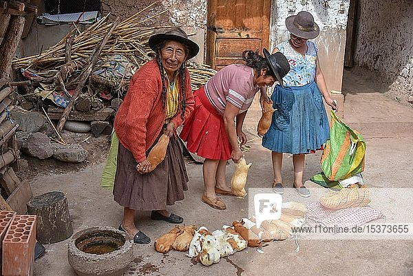 Local women kill Cuys  giant guinea pigs for preparation to traditional Cuy dish  Cusco  Peru  South America