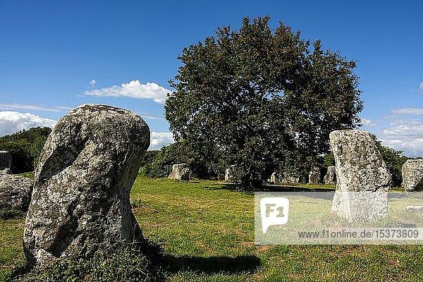 Erdeven  Stehende Steine  Menhire von Kerzerho  Departement Morbihan  Bretagne  Frankreich  Europa