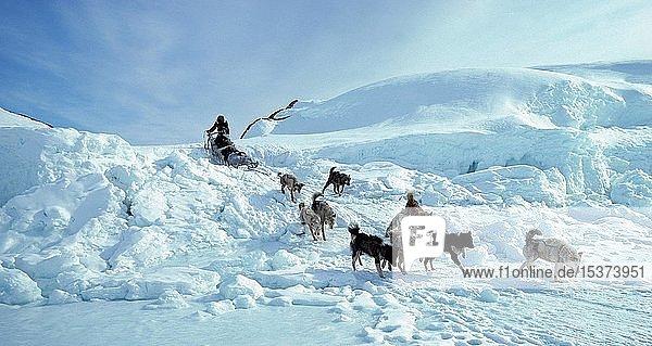Inuk mit Hundeschlitten in Schneelandschaft  Ostgrönland  Grönland  Nordamerika