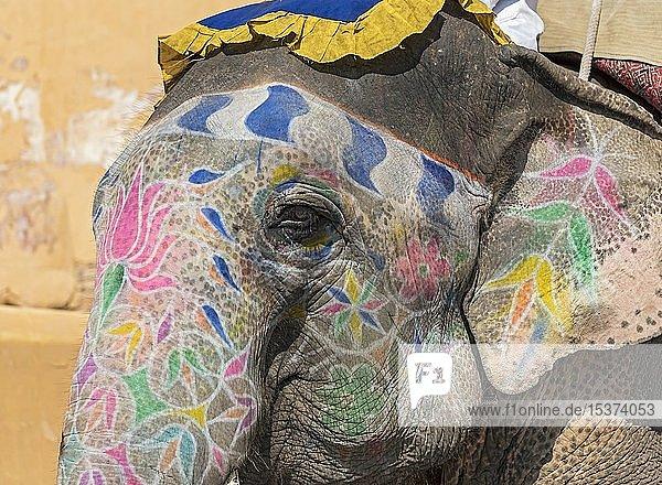 Nahaufnahme des bemalten indischen Elefanten bei Amber Fort  Jaipur  Rajasthan  Indien  Asien