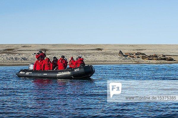 Touristen in einem Sternzeichen  die eine Kolonie Walross (Odobenus rosmarus) beobachten  liegt auf einer Kiesbank  Torellneset  Arktis  Svalbard