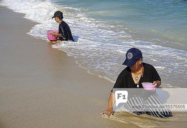Thailändische Frauen suchen im Sand nach angeschwemmten Muscheln  Lamai Strand  Koh Samui  Golf von Thailand  Thailand  Asien