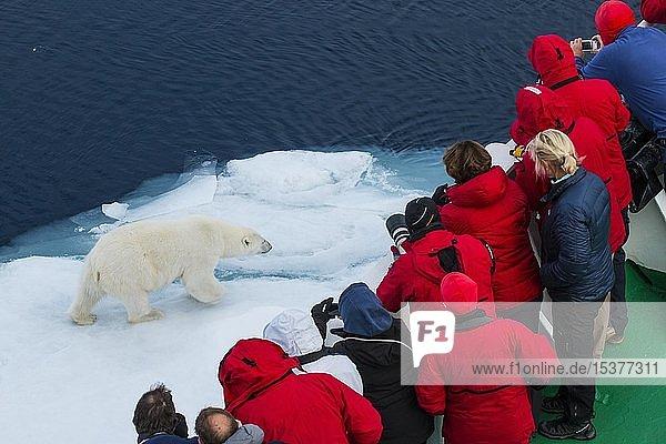 Touristen auf einem Schiff beobachten Eisbär (Ursus maritimus) auf Eisscholle  Arktis  Spitzbergen  Norwegen  Europa