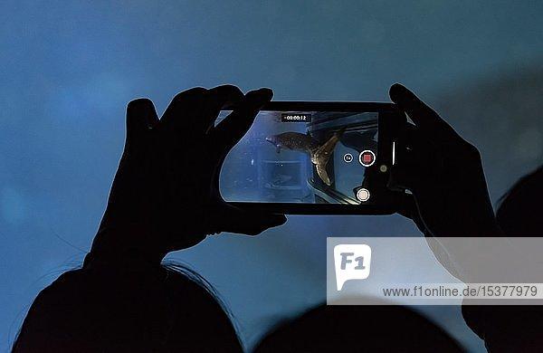 Besucher,  fotografiert mit Handy vor einem großen Aquarium einen Walhai,  Silhouette,  Osaka Aquarium Kaiyukan,  Osaka,  Japan,  Asien