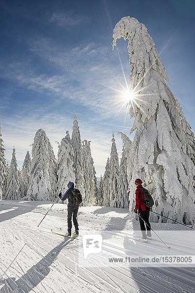 Cross-country skiers on cross-country trail surrounded by snow-covered spruces  Feldberg  Black Forest  Baden-Württemberg  Germany  Europe