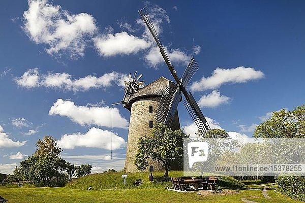 Seelenfelder Königsmühle  Wall-Holländer von 1731  Petershagen  Westfälische Mühlenroute  Nordrhein-Westfalen  Deutschland  Europa