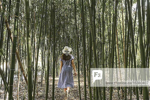 Rückansicht einer Frau  die in einem Bambuswald spazieren geht  Aveiro  Portugal