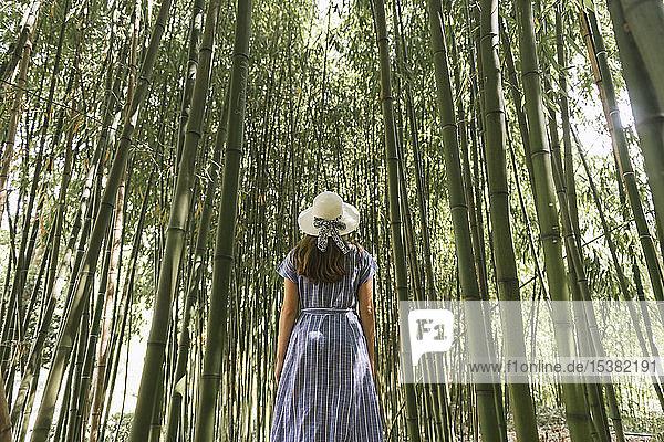 Rückansicht einer Frau in einem Bambuswald  Aveiro  Portugal