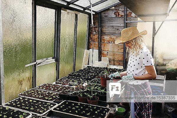 Junge Frau gärtnert in einem Gewächshaus