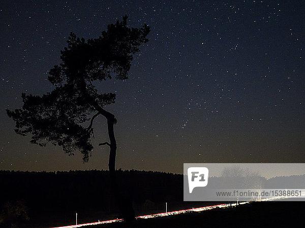 Deutschland  Bayern  Nabburg  Sternenhimmel mit Baum- und Lichtspuren