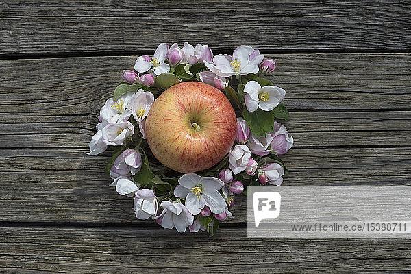 Apfel 'Gala Royal' umgeben von Apfelblüten auf Holz