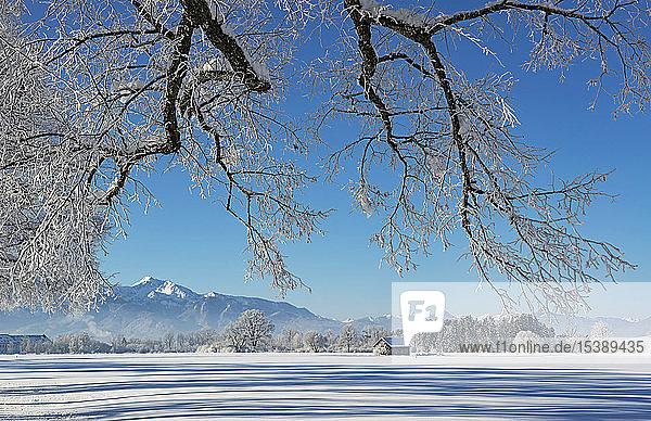 Deutschland  Oberbayern  Benediktbeuern  Winterlandschaft