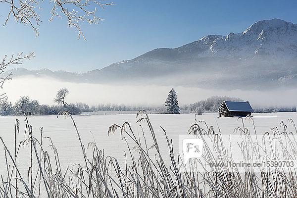 Deutschland  Oberbayern  Werdenfelser Land  Kochel  Winterlandschaft