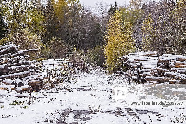 Canada  New Brunswick  Miramichi River Valley  Upper Blackville  logs under snow.