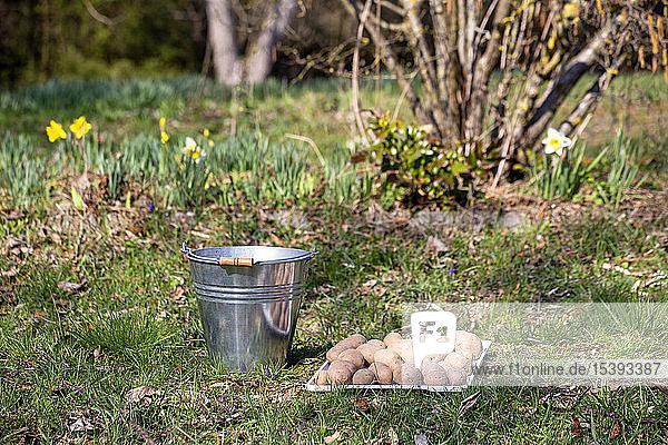 Kartoffeln und Eimer auf Gras