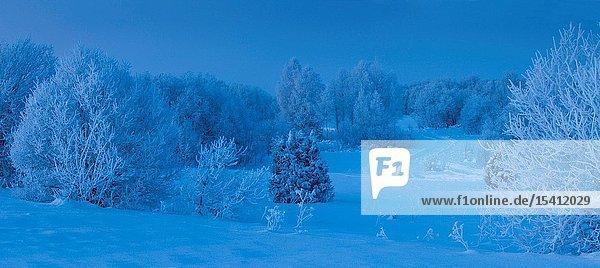 Snowy field in West Viru county