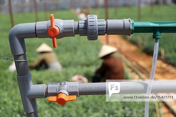 Vegetable farm. Agricultural irrigation system. Dalat. Vietnam.
