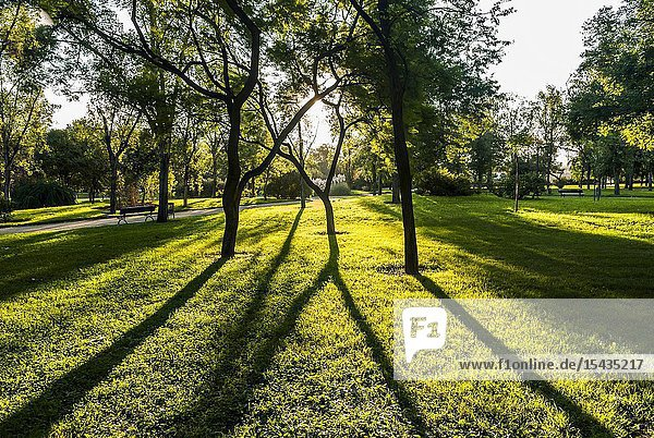Gardens in the Old Turia River bed (Valencia  Spain)