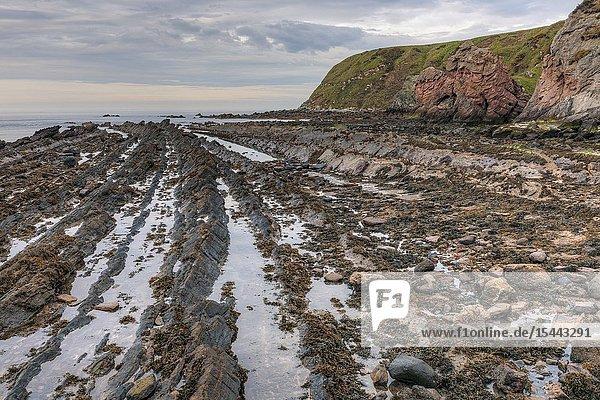 Cove  Cockburnspath  Berwickshire  Scotland  UK  Europe.