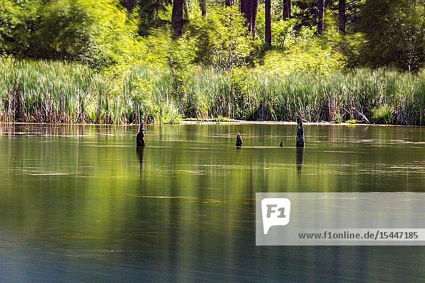 Spring Lake on Tucannon Road outside Pomeroy  Washington  is a state managed resource that offers outdoor recreation opportunities from fishing to sheer enjoyment.